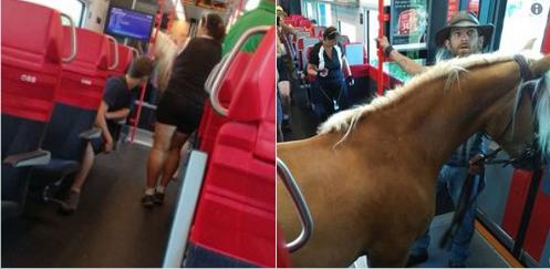"""Résultat de recherche d'images pour """"Il monte dans le train avec son cheval"""""""