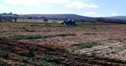 L Etat récupère 53 hectares de terrains domaniaux à Béja