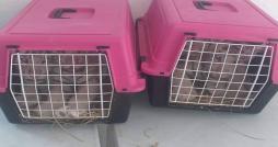 Ras Jedir : Même les bébés tigres blancs n'ont pas échappé à la contrebande