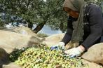 Olives: