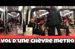 Il vole une chèvre et emprunte le métro avec le mammifère (Vidéo)