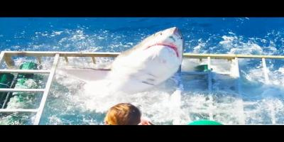 Un plongeur tombe nez-à-nez avec un requin blanc et en sort indemne (En Vidéo)